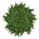 Geïsoleerde boom. Pinus sparrenbovenkant Royalty-vrije Stock Foto's