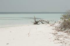 Geïsoleerde boomstam op het strand stock afbeeldingen