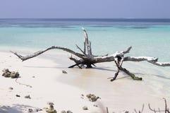 Geïsoleerde boomstam op het strand royalty-vrije stock foto