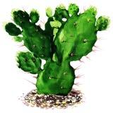 Geïsoleerde cactus, waterverf het schilderen stock illustratie