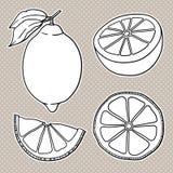 Geïsoleerde citroenen Grafische gestileerde tekening Vector illustratie Stock Fotografie
