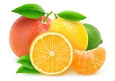Geïsoleerde citrusvruchten Stock Afbeeldingen