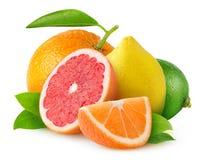 Geïsoleerde citrusvruchten royalty-vrije stock foto's