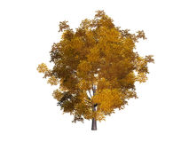 Geïsoleerde de boom van de daling stock illustratie