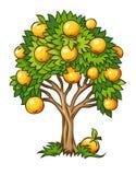 Geïsoleerde de boom van het fruit Stock Fotografie