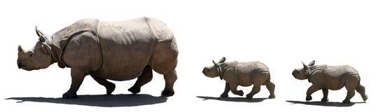 Geïsoleerde. de familie van de rinoceros Stock Afbeeldingen
