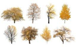 Geïsoleerde de herfstbomen Stock Fotografie