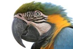 Geïsoleerde= de Papegaai van de ara Stock Afbeeldingen