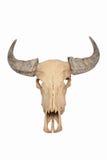 Geïsoleerde de Schedel van de stier Stock Afbeeldingen