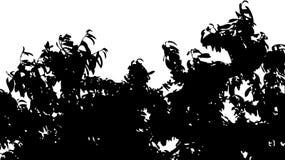 Geïsoleerde de takken van de boomkroon Stock Afbeeldingen