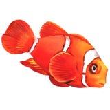 Geïsoleerde de vissen van de clownanemoon Stock Afbeelding