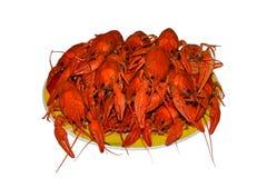 Geïsoleerde die groep rood crawfishes op een gele plaat, close-up wordt gekookt stock afbeelding