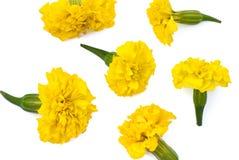 Geïsoleerde gele weidebloemen Stock Foto