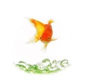 Geïsoleerde goudvis royalty-vrije stock afbeelding