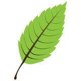 GeïsoleerdE groen blad Royalty-vrije Stock Afbeelding