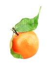 Geïsoleerde groenten stock foto's