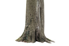 Geïsoleerde grote boomstam Stock Afbeelding