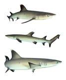 Geïsoleerde haaien royalty-vrije stock afbeeldingen