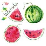Geïsoleerde hand getrokken waterverfwatermeloen vector illustratie