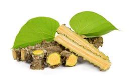 Geïsoleerde het kruid van Tinosporacordifolia Stock Afbeelding