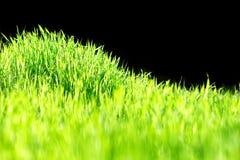 Geïsoleerde heuvel met groen gras royalty-vrije stock afbeeldingen