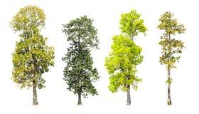 Geïsoleerde inzameling van bomen stock afbeelding