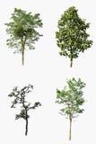 Geïsoleerde inzameling van mooie groene bomen Stock Foto