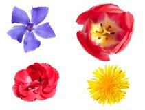 Geïsoleerde kleurrijke bloemen Royalty-vrije Stock Fotografie
