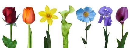 Geïsoleerde kleurrijke regenboog van de foto van de bloemendekking Stock Fotografie