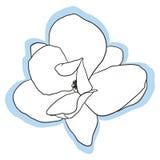 Geïsoleerde magnoliabloem Royalty-vrije Stock Foto's