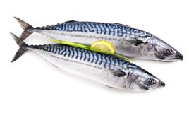 Geïsoleerde makreel ruwe fishh Royalty-vrije Stock Foto