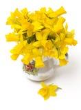 Geïsoleerde narcissenbloemen Royalty-vrije Stock Foto