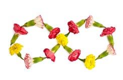 Geïsoleerde oneindigheid van weidebloemen Stock Foto
