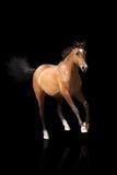 Geïsoleerde paard Royalty-vrije Stock Afbeelding