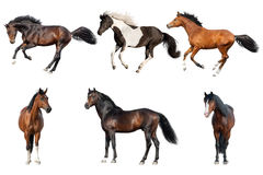 Geïsoleerde paardinzameling Stock Foto