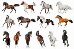 Geïsoleerde paardinzameling stock afbeelding