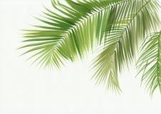 Geïsoleerde palmbladen Stock Afbeelding