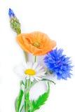 Geïsoleerde papaverbloemen en korenbloem Stock Foto