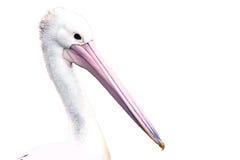 Geïsoleerde pelikaan Stock Afbeeldingen