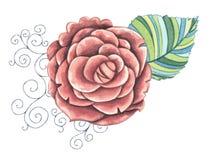 Geïsoleerde pioenbloem De illustratie van de waterverf Stock Afbeeldingen