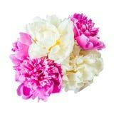 Geïsoleerde pioenbloemen Royalty-vrije Stock Fotografie