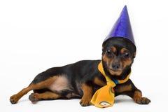 Geïsoleerde portret van grappige hond Royalty-vrije Stock Afbeeldingen