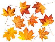 Geïsoleerde reeks bladeren van de Herfst. Royalty-vrije Stock Foto