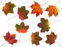 Geïsoleerde reeks bladeren van de Herfst. Stock Foto's