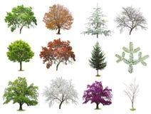 Geïsoleerde reeks bomen Stock Foto's