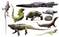 Geïsoleerde reeks reptielen Stock Foto