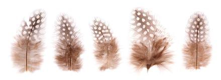 Geïsoleerde reeks van mooie breekbare weinig vogelveren royalty-vrije stock afbeelding