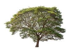 Geïsoleerde regenboom op witte achtergrond Stock Foto's