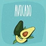Geïsoleerde rijpe avocadovruchten geheel en besnoeiing Stock Foto