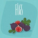Geïsoleerde rijpe fig. of fig.vruchten Royalty-vrije Stock Fotografie